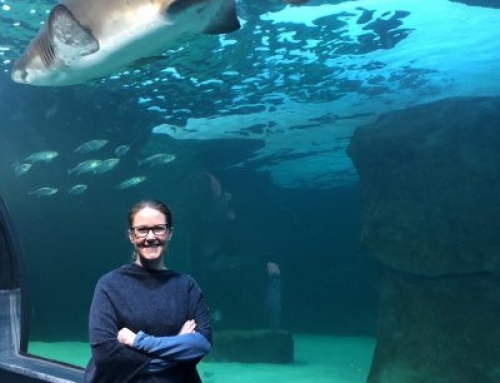 Minute with an #Attractions19 Industry Rock Star: Alichia Nortje