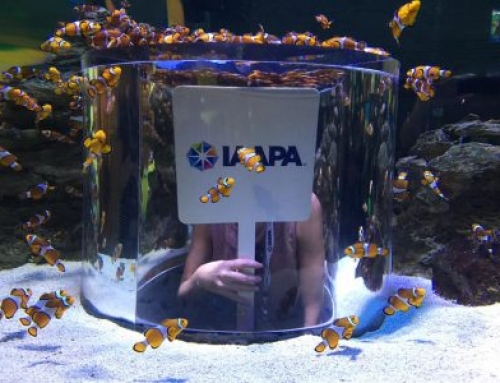 IAAPA EMEA South African Summit 2020 in review